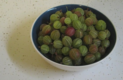 gooseberries